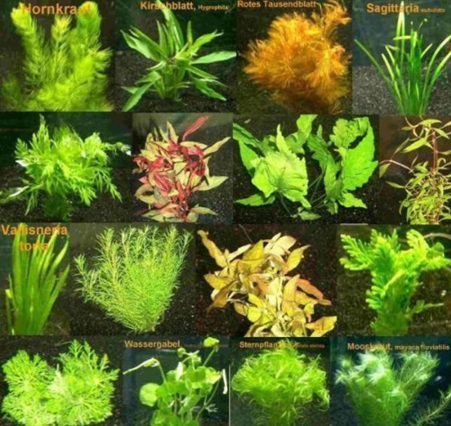 280 aquatic plants, red and green, 40 bunch