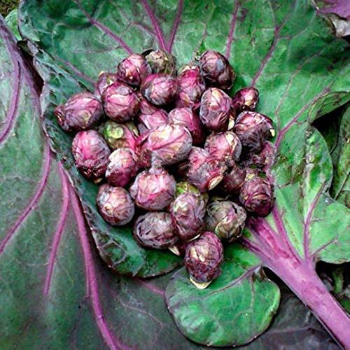 Hot vente 50 graines / pack Bhut Jolokia Seeds India graines fantôme poivre semences de légumes maison jardin