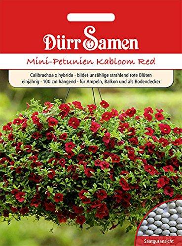 Mini-Petunien, Kabloom Red, Samen,...