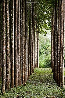 Teak Plantation in Rainforest of Belize Tree Journal: 150 page lined notebook/diary