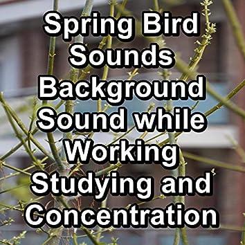 Forest Bird Sounds