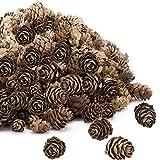 Apipi 200pcs Thanksgiving Rustic Mini Brown Pine Cones...