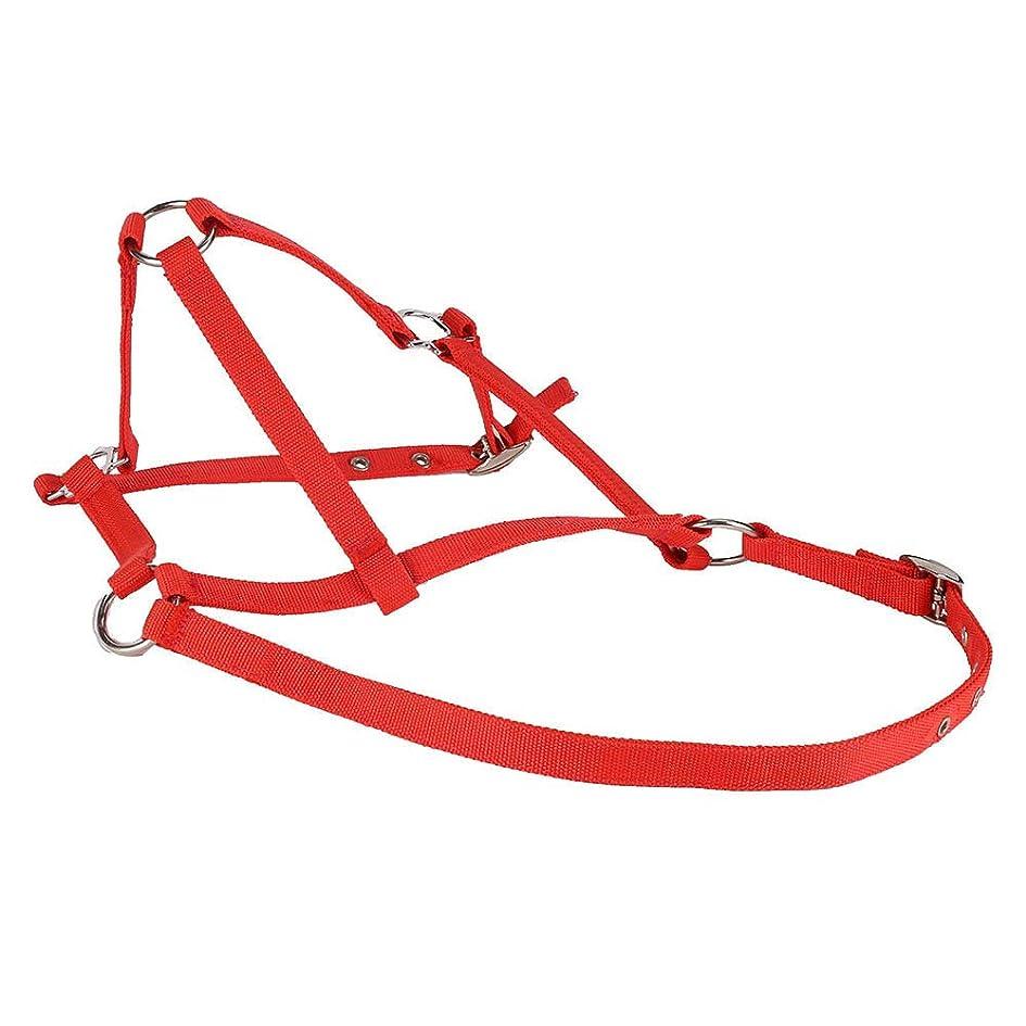 コントローラ巻き取り育成馬のロープトレーニングホルター、充填されたナイロンコード、ロープは耐久性、使いやすく、安全のためにナイロンとポリエステル製のほとんどのトレーナーに適しています