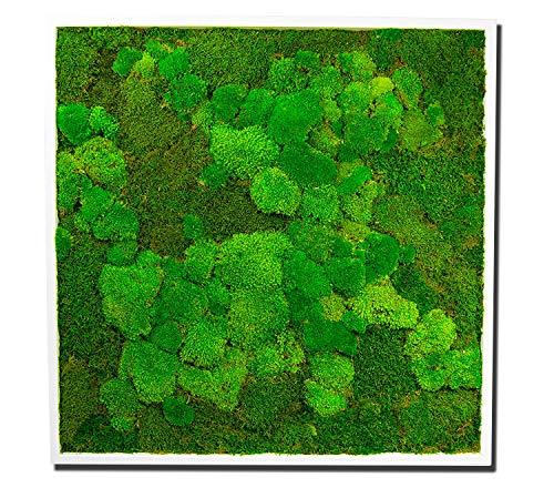 Moosbild Angebot Wandbild mit Moos Kugelmoos Moosplatte Pflanzenbilder Moosbilder versch. Maße günstig (85x85 cm, weiß)