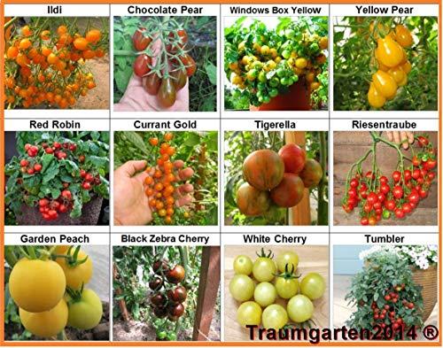 Tomaten Set 3: Balkontomate Cherrytomate Cockteiltomate 12 Sorten je 10 Samen hohe Toleranz gegen Braunfäule Saatgut