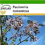SAFLAX - Albero della principessa - 200 semi - Con substrato - Paulownia tomentosa