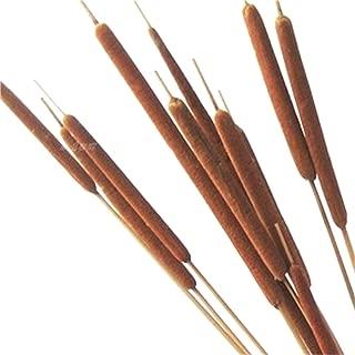 Dongliflower 40 Stems,Dried Natural Cattails Jumbo 24