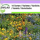 SAFLAX - Pradera de montaña - 1000 semillas - 16 Wildflower Mix