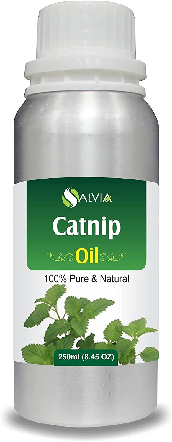 Catnip OFFicial mail order Nepeta cataria Essential 70% OFF Outlet Oil Undilu 100% Natural Pure