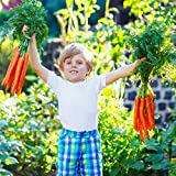 semi di carota per piantare giardino domestico all'aperto -1000+ semi di carota per piantare - cimelio di famiglia non ogm