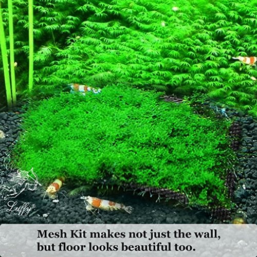 Wild Christmas Moss in Loose Form --- Easy to Grow Live Plant for Aquarium - Lush, Green Moss for Decor - Create Moss Wall or Moss Carpet - Soft, Comforting for Fish - Food Source for Fry & Shrimps