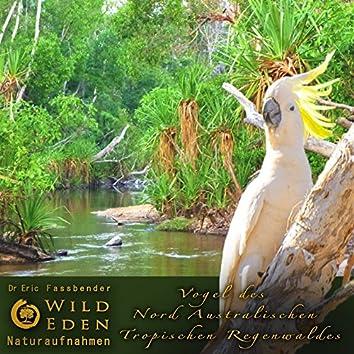 Vögel Des Nord Australischen Tropischen Regenwaldes