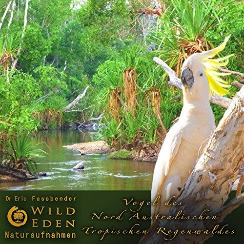 Vögel Und Grillen Im Regenwald
