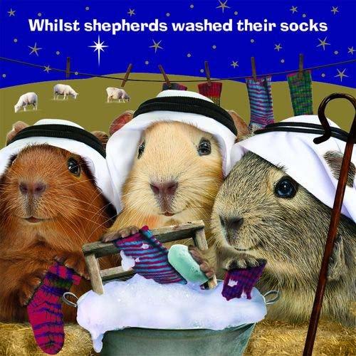 Weihnachtskarte - Guinea Pig Christmas - Socken stricken