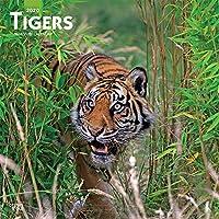Tigers 2020 Calendar