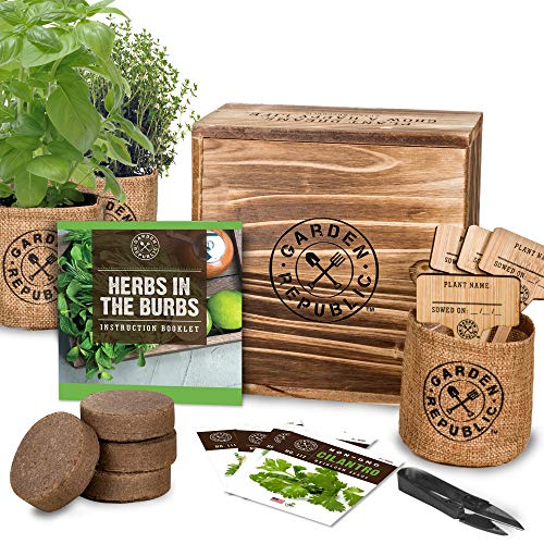 Indoor Herb Garden Starter Kit - Heirloom, Non-GMO Herb Seeds - Basil Thyme Parsley Cilantro Seed, Potting Soil, Pots, Scissors - DIY Grow Kits for Growing Herbs Indoors, Kitchen, Balcony, Window Sill