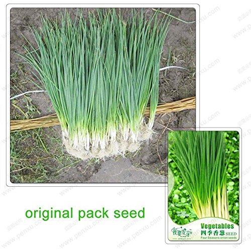 120 graines / Pack, oignons saisons, balcon poireaux plantes en pot, graines de bonsaï ciboulette légumes biologiques
