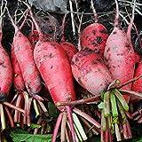 Semi di carota, buccia rossa di Pechino e ravanello a polpa bianca 300 pezzi