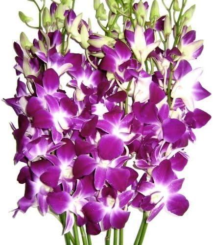Graduation Flowers - sale 10 Dendrobium Purple A surprise price is realized Stems Orchid