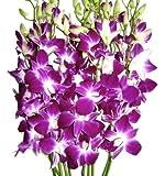 Fresh Cut Orchids