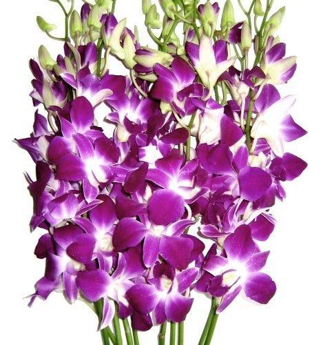 Premium Cut Purple Orchids (10 Stems Orchids)