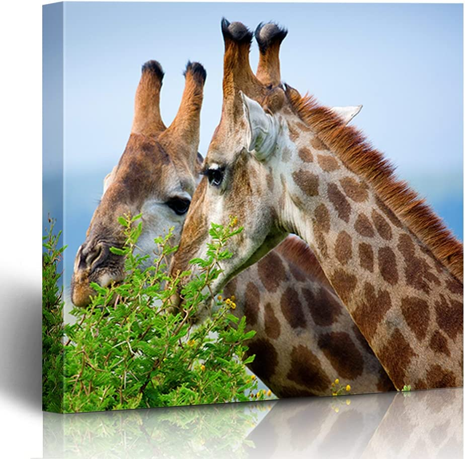 Onete Wall Art Free shipping anywhere in the nation for Living Giraffes Room Conservation Grazing Manufacturer regenerated product Veg