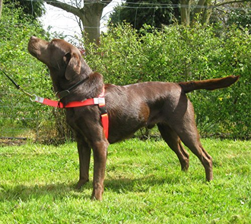Walk Your Dog With Love - Hundegeschirr gegen Ziehen. Leinenführung vorne. Farbe: rot