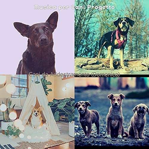 Musica per Cani Progetto