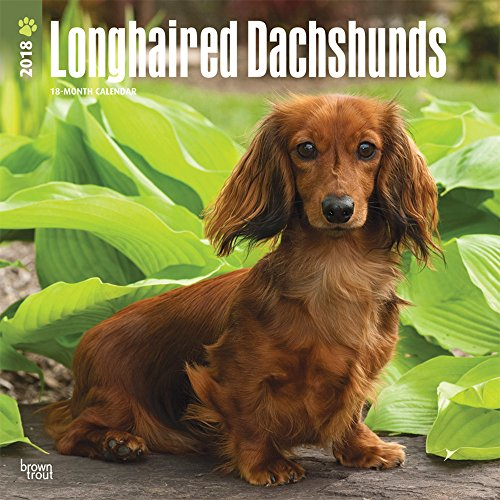 Longhaired Dachshunds - Langhaardackel 2018 - 18-Monatskalender mit freier DogDays-App: Original Bro