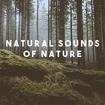 Natural Sounds Of Nature