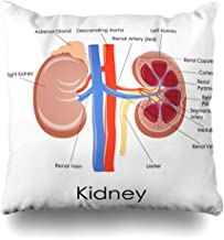 Ahawoso Throw Pillow Cover Kidney Adrenal Diagram Human Anatomy Science Gland Urology System Urinary Section Design Cross Home Decor Pillowcase Square Size 16 x 16 Inches Zippered Cushion Case