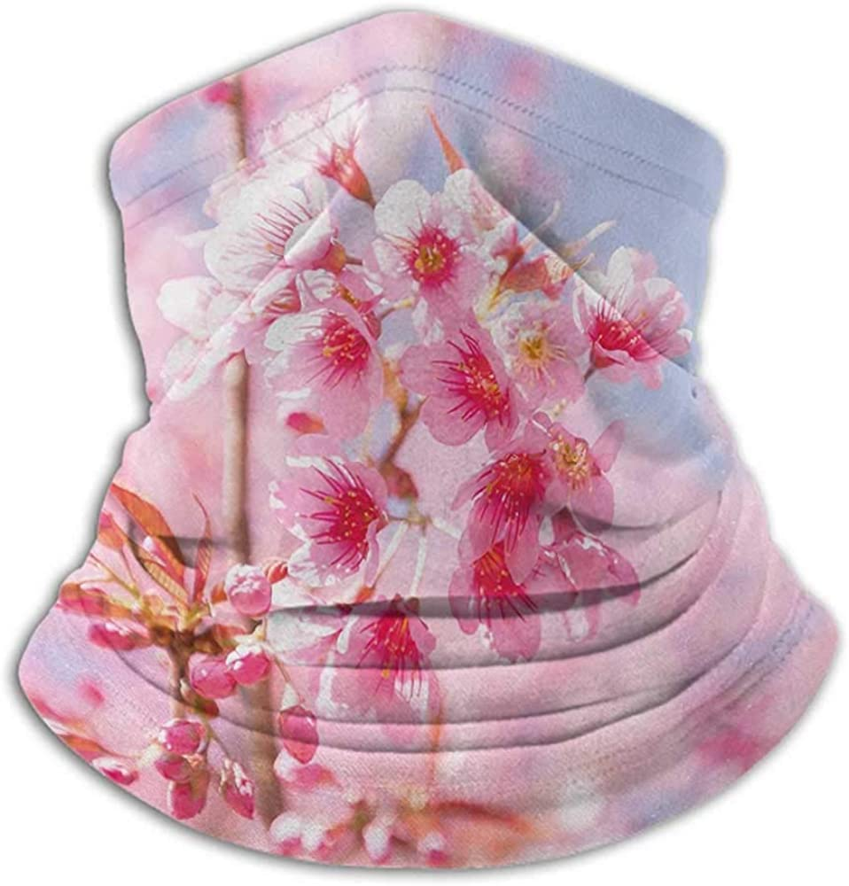 Face Scarf Floral Headband Neck Gaiter Sakura Blossom Branches Flower Essence Fragrance Nature Inspired Picture Light Pink Purplegrey