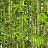 papel pintado bambu