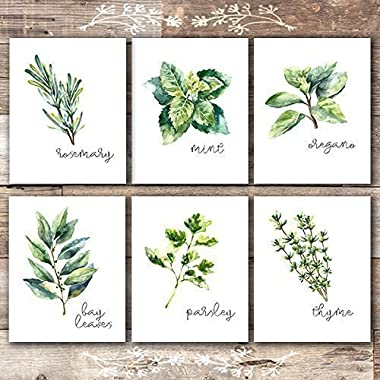 Kitchen Herbs Art Prints - Botanical Prints - (Set of 6) - Unframed - 8x10s