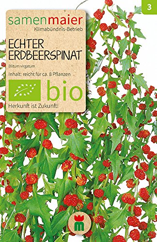 Samen Maier 792 Echter Erdbeerspinat (Bio-Erdbeerspinatsamen)