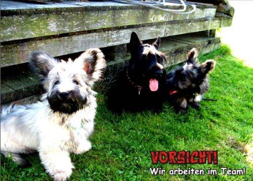INDIGOS UG - Türschild FunSchild - SE688 DIN A5 laminiert ACHTUNG Hund Skye Terrier - für Käfig, Zwinger, Haustier, Tür, Tier, Aquarium
