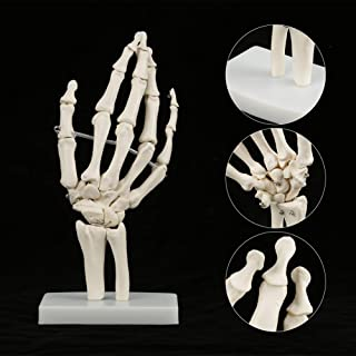 Anatomical Hand Model, Hand Bone Mold, High Strength Life-size Hand Skeleton Model, Educational White with Base for Hospit...