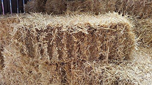 Fleet Farm™ Handy Size Barley Straw Bale - Feed Quality (90cm x 50cm x 40cm) 4