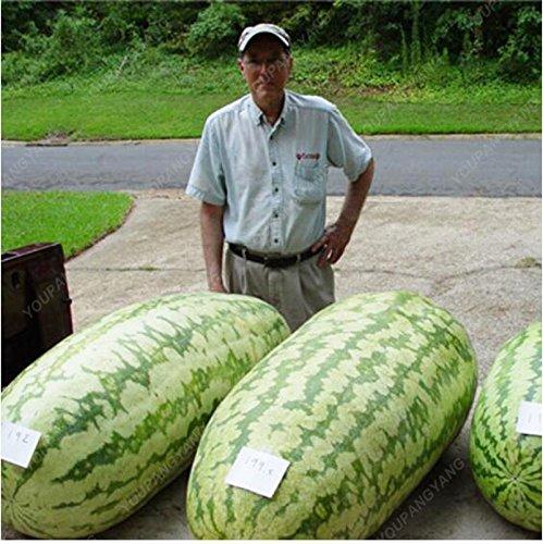 30 pcs / sac gaint graines de melon d'eau douce santé grosses graines de fruits aliments biologiques pastèque plante en pot extérieur pour le jardin à la maison