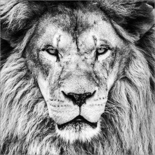 Posterlounge Acrylglasbild 30 x 30 cm: König Löwe – Schwarz/Weiß von Editors Choice - Wandbild, Acryl Glasbild, Druck auf Acryl Glas Bild