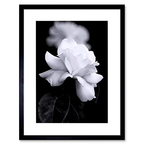 Black And White Flower Pictures Amazon