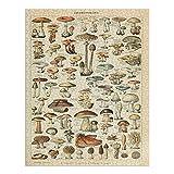 Mushrooms, C, Vintage Bookplate, Adolphe Millot Artwork (1000 Piece Premium Puzzle, Made in USA)