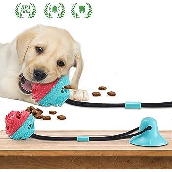hund molar spielzeug