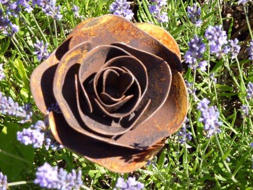Albert Hechinger Edelrost Rose