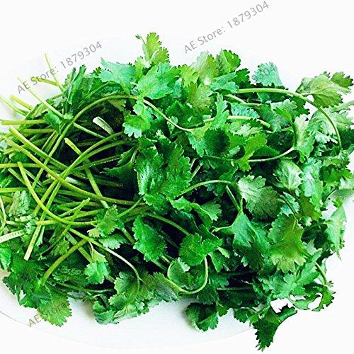 30pcs / sac Coriandre Graines Nourriture cuisson légumes Jardin des plantes d'ornement pour, quatre saisons peuvent se développer eesy