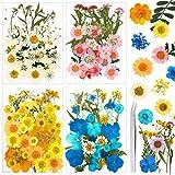 Auihiay 151 pièces vraies fleurs pressées séchées pour l'artisanat, marguerites de fleurs pressées colorées pour bricolage bougie résine bijoux ongles pendentif artisanat Art décorations florales