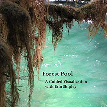 Forest Pool Guided Visualization