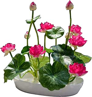 Best mini lotus plants Reviews