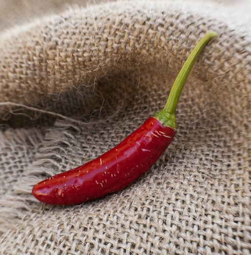 Serrano Heirloom Chili Pepper Premium Seed Packet + More