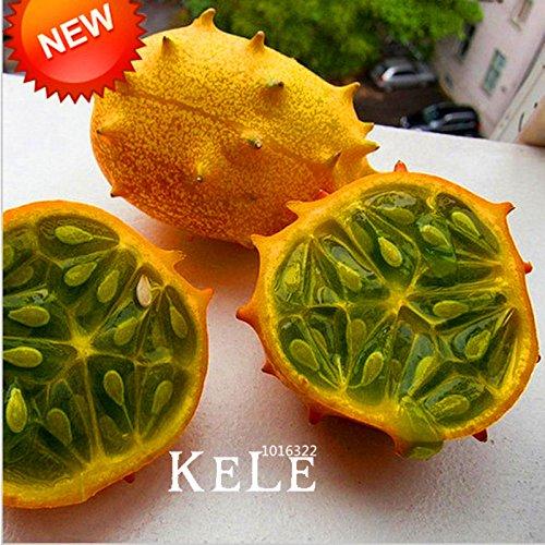 Four Seasons petit balcon semences de légumes en pot parfumé graines échalote - 100 pcs / lot